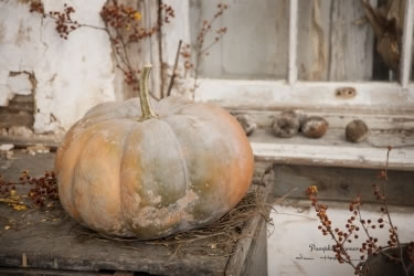 Pumpkin Corner
