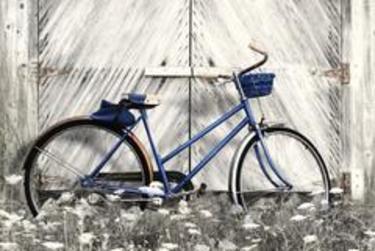 Blue Bike At Farm