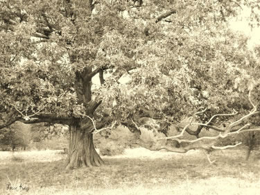 Metallic Tree