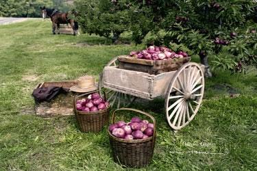 Aaron's Apples
