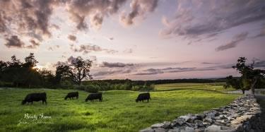 Brady Farm