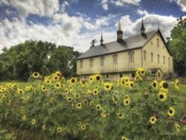 Sunflower Garden